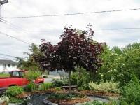 balsom_gardens_in_spring_201-1_op_658x493